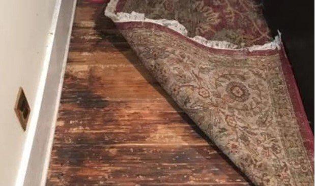 Replace damp Rug and Carpet