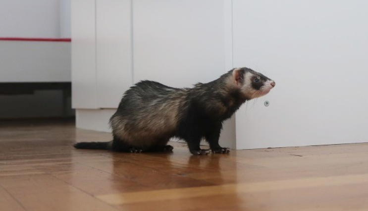 Things to Look for Before Buying a Air Purifier for Ferret Odor