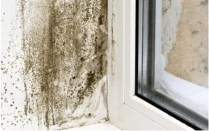 What Are The sign to identify if your home is humid